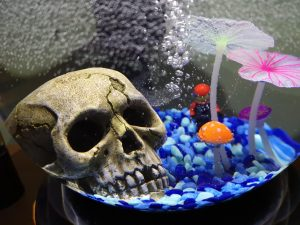 Fish Tank With Waterfall