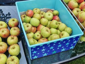 The last of the apples