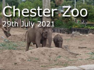 Read more about the article A Visit To Chester Zoo